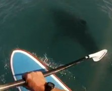 Paddling With a Shark