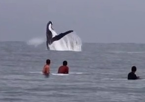 surfing with the whales