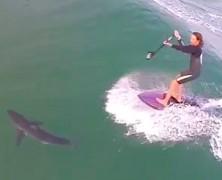SUP & SHARK